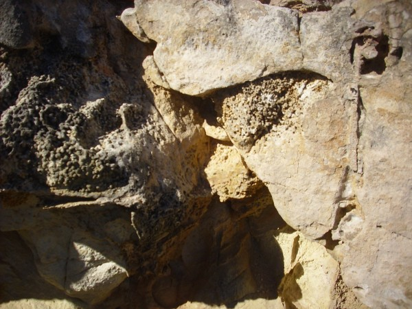 Possible           rhizolith in Entrada Formation