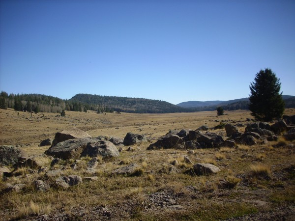 Mountain meadow on         the La Grulla Plateau