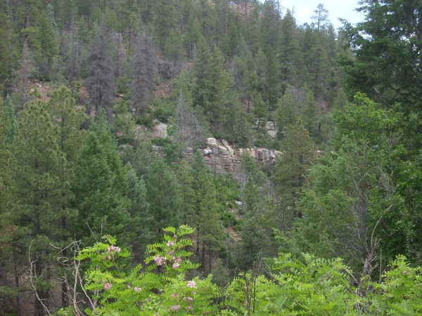 Madera Group           in Bale Canyon